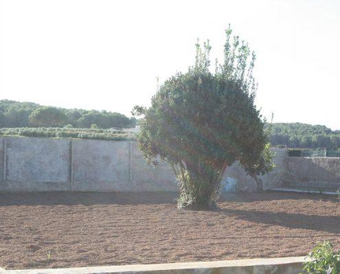 TERRENO AGRARIO EN VENTA EN SANT PERE DE RIBAS
